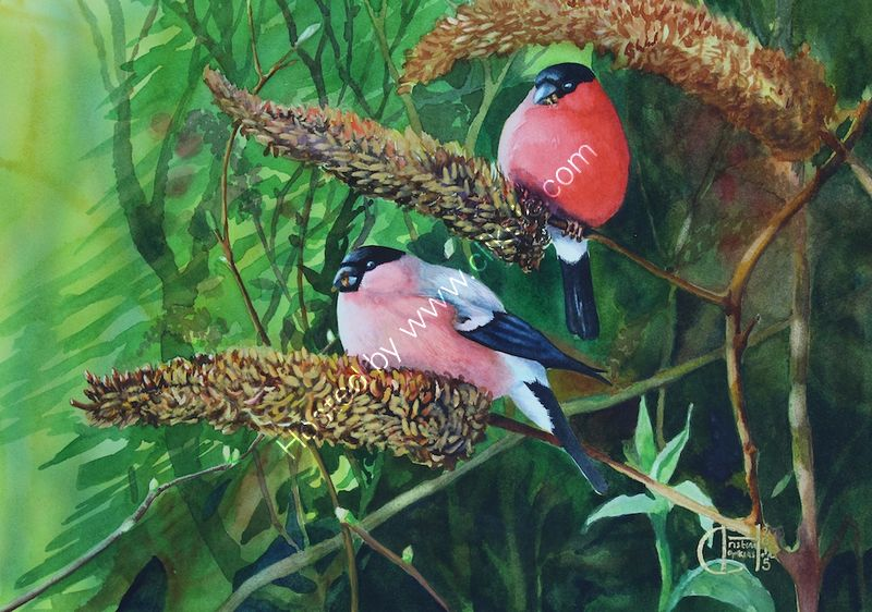 "'Male And Female Bullfinches In The Buddleia' watercolour, unframed dimensions 13.5""x19"""