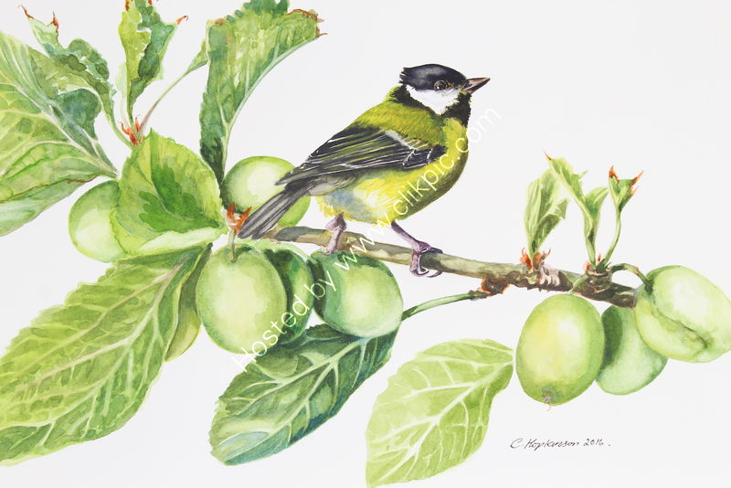 "'Great Tit On The Plum Tree' watercolour, unframed dimensions 10""x13"""