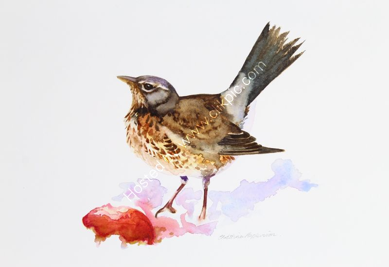 "'Fieldfare And Apple' watercolour, unframed dimensions 6.5""x6.5"""