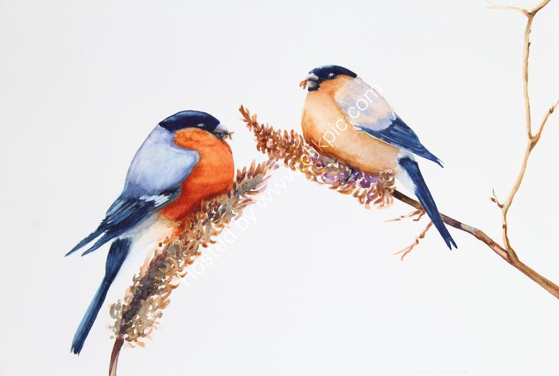 "'Balancing Act - Male And Female Bullfinches' watercolour, unframed dimensions 10""x14.5"""