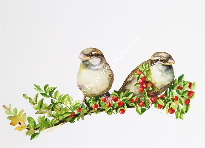 "'Female Sparrows In The Cotoneaster' watercolour, unframed dimensions 8""x12"""
