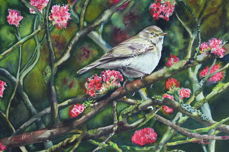 "'Chiff Chaff In Blossom' watercolour, unframed dimensions 11.5""x15.75"""