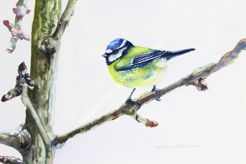 'Blue Tit On An Icy Twig' watercolour - SOLD