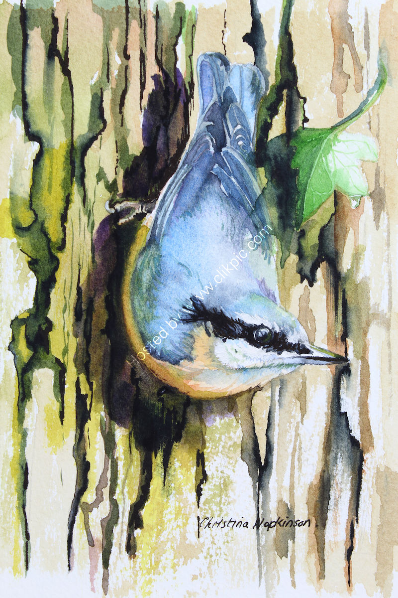 'Nuthatch' watercolour SOLD
