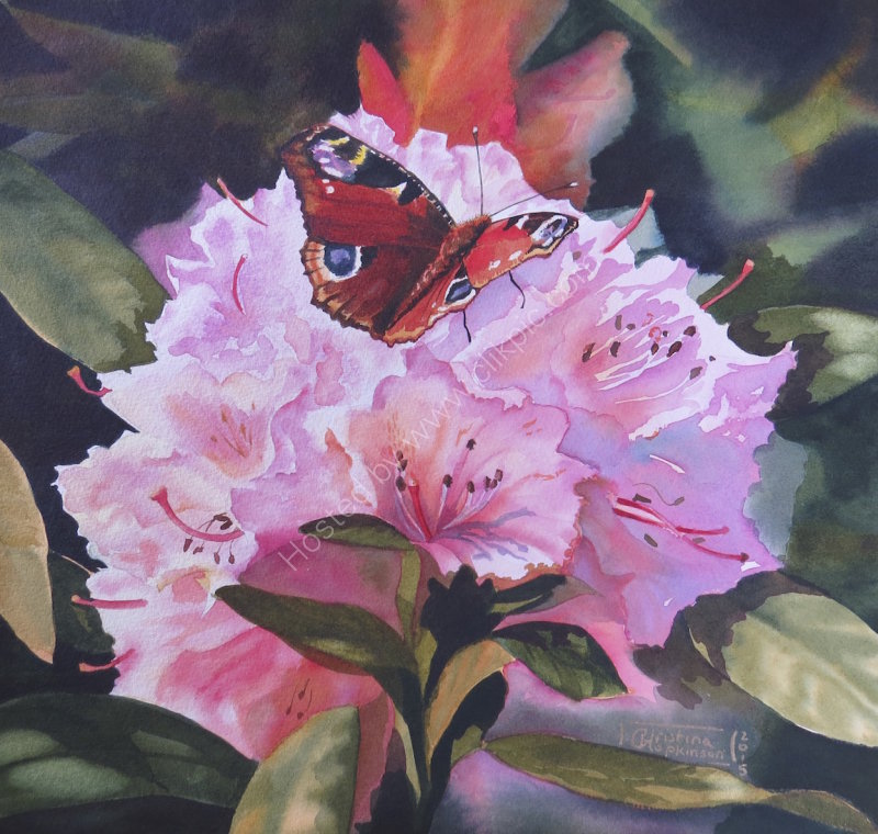 Butterfly On Rhodie