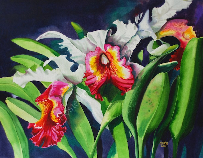 Orchids  - SOLD
