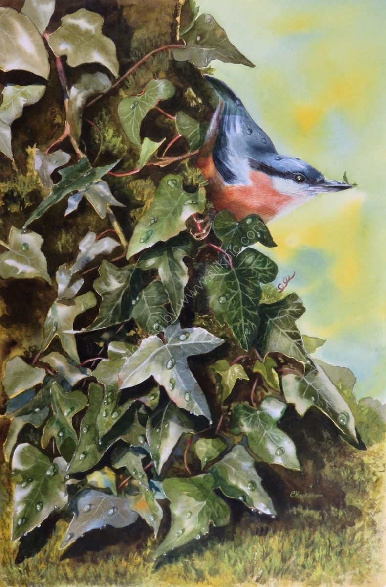 Nuthatch on the Ivy- SOLD