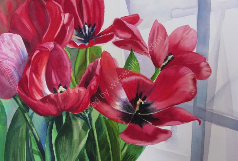Red Tulips by the Window