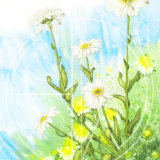 "MOON DAISIES Original Watercolour £150.  Approx size 19.5"" x 14"""