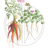 """CARROT AND CORIANDER (one of four in the 'Soup Series') Original Watercolour £150.  Approx size 18"""" x 12.5"""""""