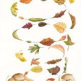 "AUTUMN LEAVES Original Watercolour £150.  Approx size 21"" x 13.5"""
