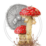 MUSHROOM FLY AGARIC - SOLD - A4 print available