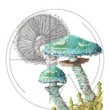 MUSHROOM VERDIGRIS FUNGI (SOLD - A4 Print available)
