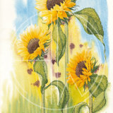"SUNFLOWERS Original Watercolour £150.  Approx size 24"" x 16"""