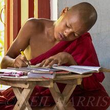 Novice studying