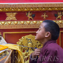 Novice monk reciting prayers