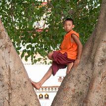 Novice tree climber