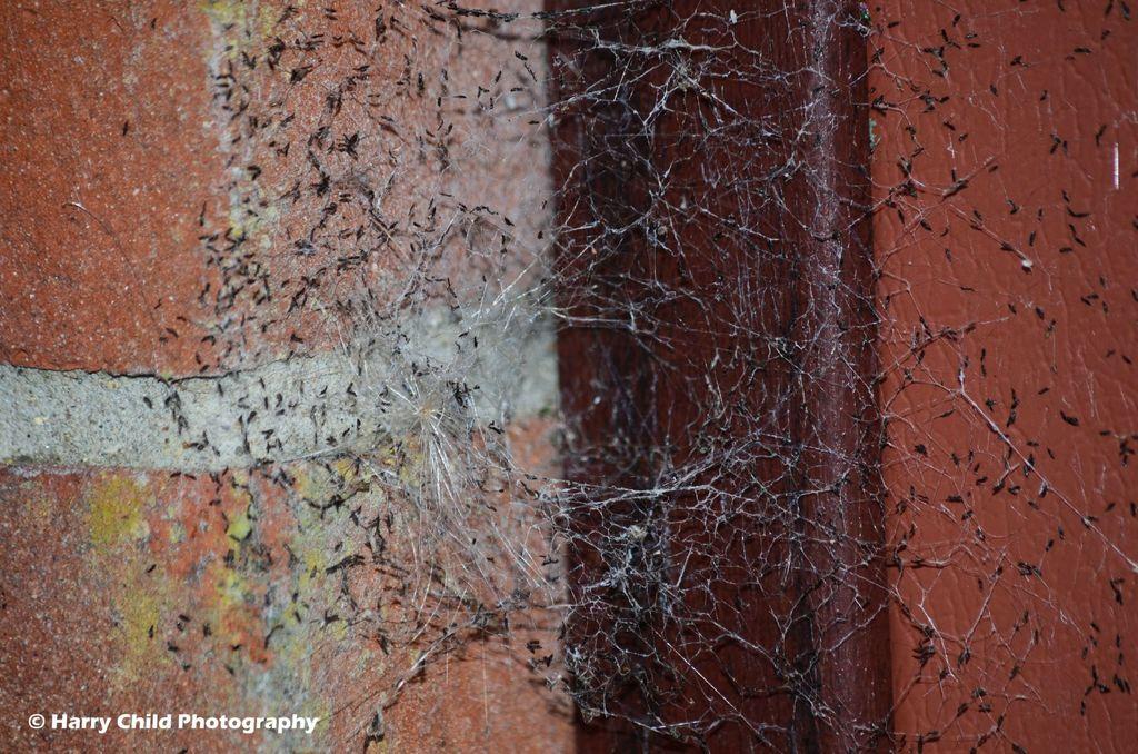 Effective Cobweb