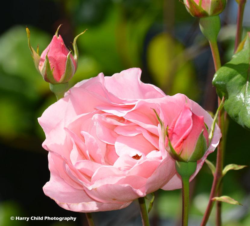 Flowers & Plants 4