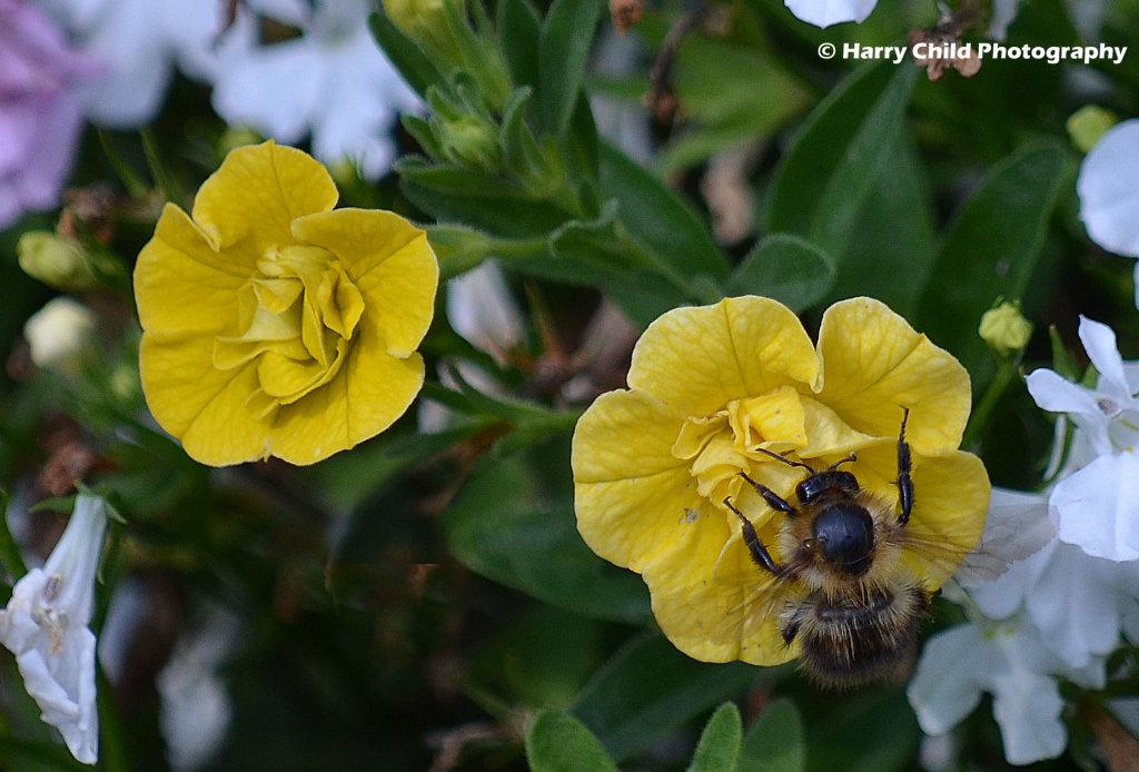 Nectar Taker