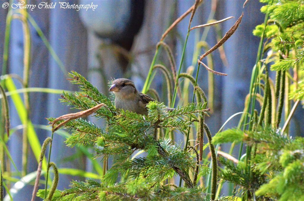 The Bird on the Tree