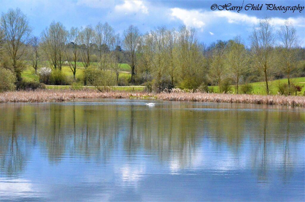 The Swan's Lake