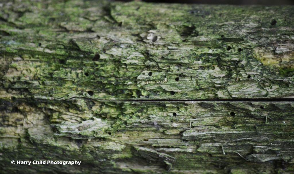 Wood Study 6