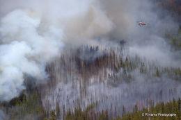 Buller  Creek  Burn  1