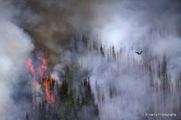 Buller  Creek  Burn  2