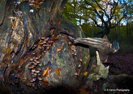 The Pixie Tree