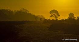 New Forest 2
