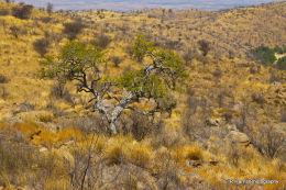 Namib Mountains