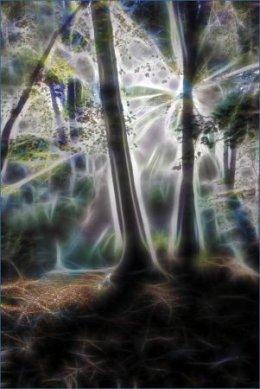 Ipsden wood