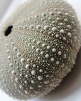 Seashell standard