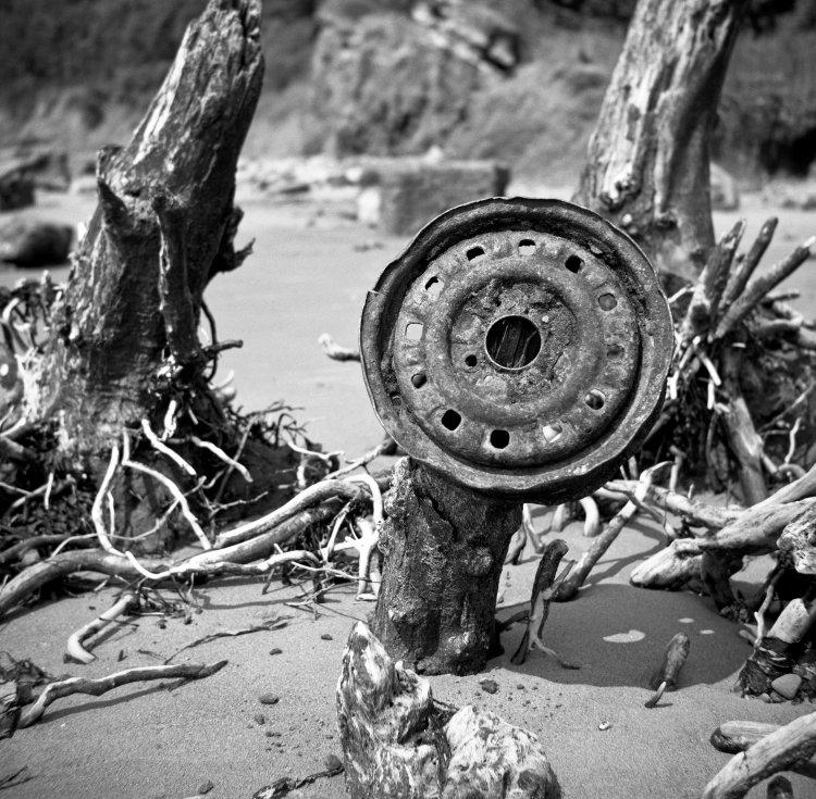 Wheel Rim on Dead Tree
