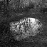 Woodland Portal