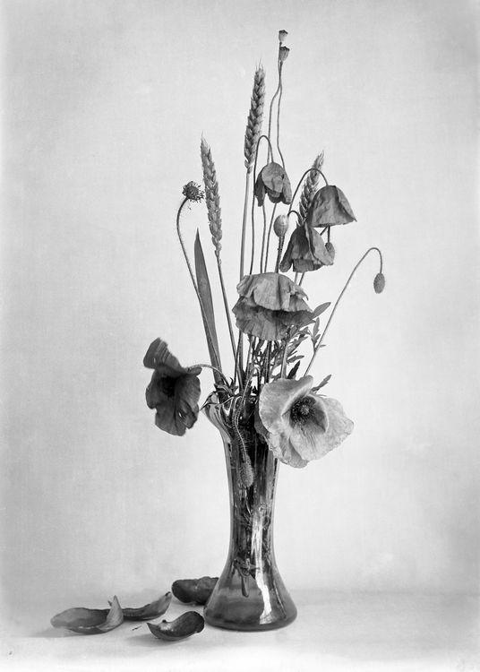 Poppies c.1907