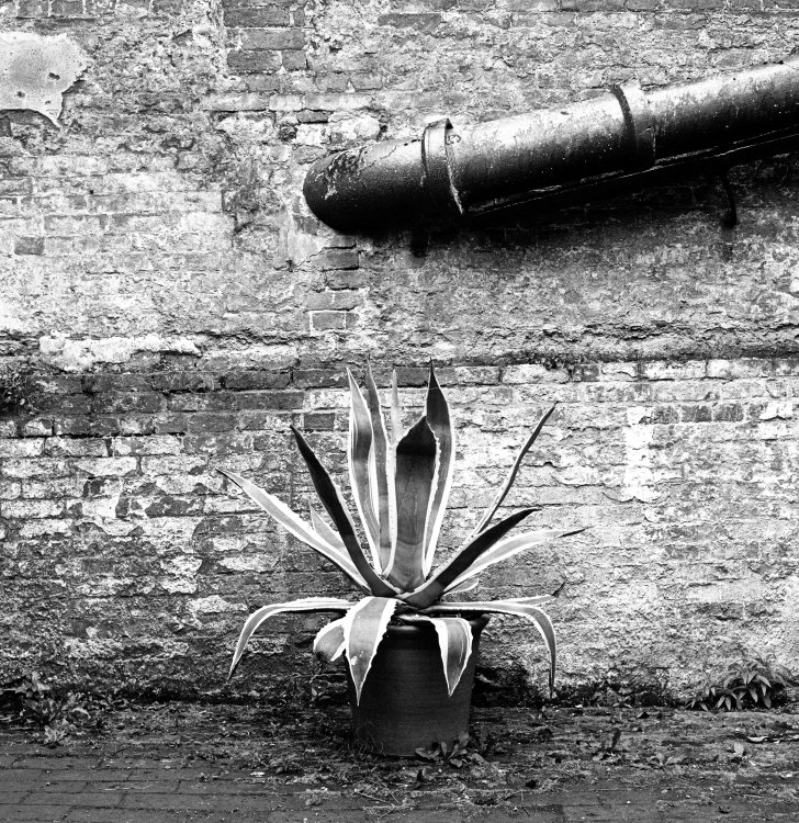 Plant and Pipe