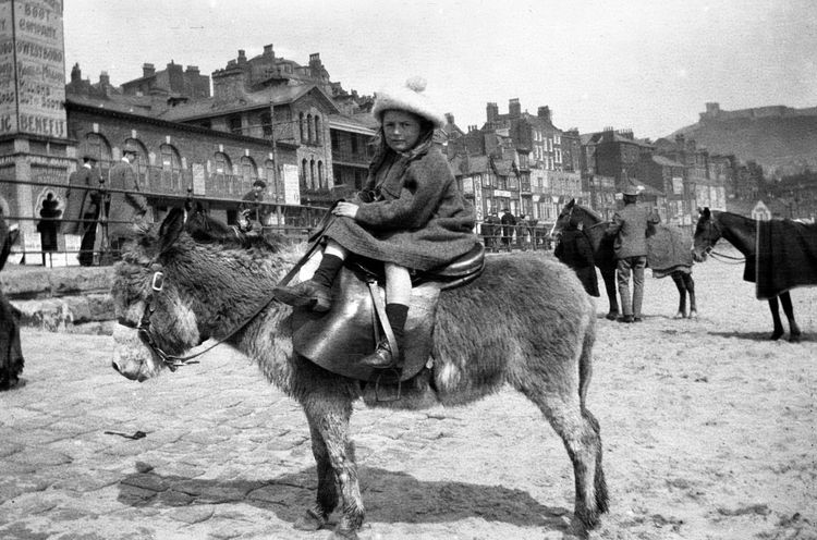 Nora Allison on a donkey, Scarborough, May 8th 1906