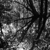 Celestial Swamp