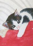 Motley Kitten