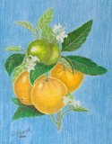 Oranges Study