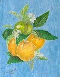 Original Oranges Study