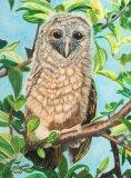Original Baby Owl