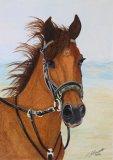 Original  William the Welsh  Cob Horse