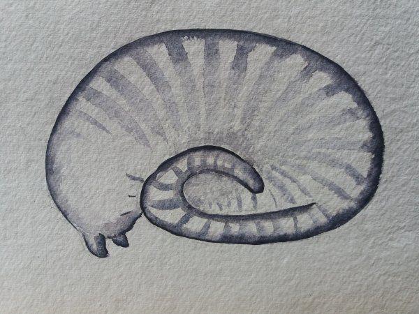 Cat Curl