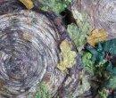 Detail of Tree Stump