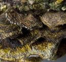 Bracket Fungus Close-up