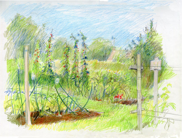 Vicarage Lane Allotment by Phil Lockwood
