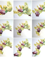 Composite of stages of orchid drawing